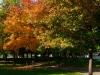 web_autunno_parco